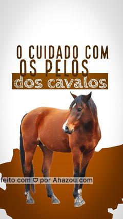 Os pelos dos cavalos são a primeira coisa que chamam atenção neles, mais é claro, existem cuidados que precisam ser tomados para que os pelos fiquem brilhantes e sedosos. Veja a seguir algumas dicas. 1- Escovar os pelos é o principal deles  2- Banhe seu cavalo em dias quentes  3- Use shampoo anti-fungos   #AhazouPet  #cats #dogsofinstagram #petlovers #dogs #veterinarian #vetpet #clinicaveterinaria #veterinary #veterinaria #veterinario