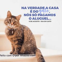 Quem tem gato sabe: nós não somos os donos,eles que são. Mas são os melhores donos!?#AhazouPet #cats #petlovers #petsofinstagram #ilovepets #dia do gato