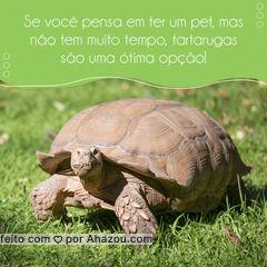 Se você quer ter um pet, mas não tem muito tempo para ficar com ele, uma tartaruga pode ser uma ótima opção. Por serem muito independentes as tartarugas lidam bem em ficar sozinhas, mas elas gostam de carinho então sempre que puder de uma atenção especial para elas. Se cuidadas de maneira correta ela pode ser sua parceira por muitos anos. #cudiosidades #tartaruga #AhazouPet #petlovers #ilovepets#turtle #petoftheday #turtle