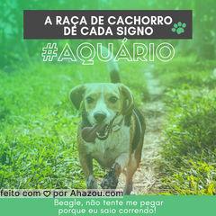 Liberdade que fala? Hahaha quem concorda? ?❤️️♒ #signos #pet #ahazoupet #dogs #aquario