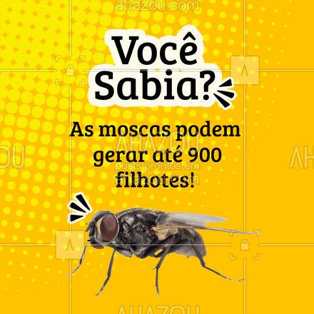 Não deixe sua casa virar uma infestação, agende sua dedetização! ? #moscas #dedetização #AhazouServiços #dedetizador #AhazouServiços