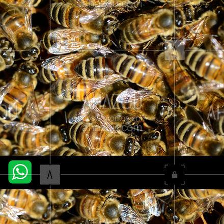 Pode ficar tranquilo, o controle das abelhas está a uma ligação de distância! Entre em contato! #dedetizadora #dedetizaçao #dedetizador #AhazouServiços #infestaçao #pragas #insetos #intrusos #desinfecção #AhazouServiços