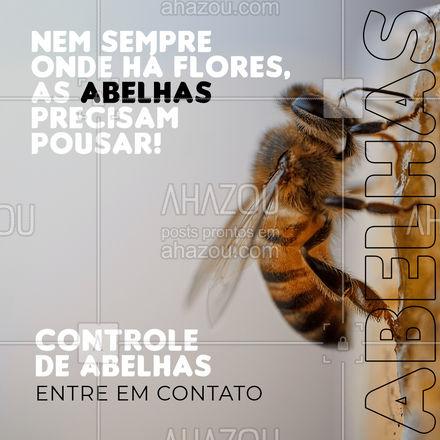 Você pode ter flores sem se incomodar com abelhas depois da nossa dedetização! Entre em contato: ?(preencher) #AhazouServiços #abelhas #controledeabelhas #dedetização #ddt #serviços #entreemcontato