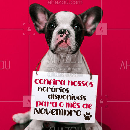 Para tudo! Já estamos com a agenda aberta para o mês de Novembro, entre em contato.  #AhazouPet #agenda #mesdenovembro #petoftheday #petlovers #ilovepets #cats
