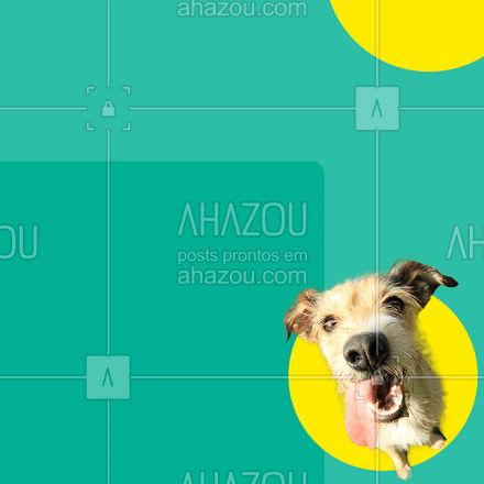 Aproveite nossa promoção do mês e faça seu pet feliz! #AhazouPet #promocao  #cats  #dogsofinstagram  #ilovepets  #petoftheday  #dogs  #petsofinstagram  #petlovers