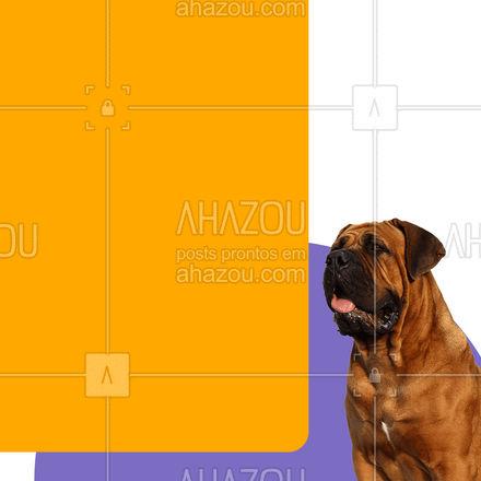 Basta entrar em contato e reservar o horário para o seu pet! #AhazouPet #racasgrandes #portegrande  #dogs  #petoftheday  #ilovepets  #petlovers