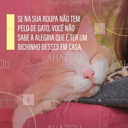Quem é pai e mãe de gato sabe muito bem que sempre vai ter pelos em suas roupas, mas se você não tem chegou a hora de adotar um e ter mais alegria em sua casa. ?? #Gato #Pet #AhazouPet #DiadoGato