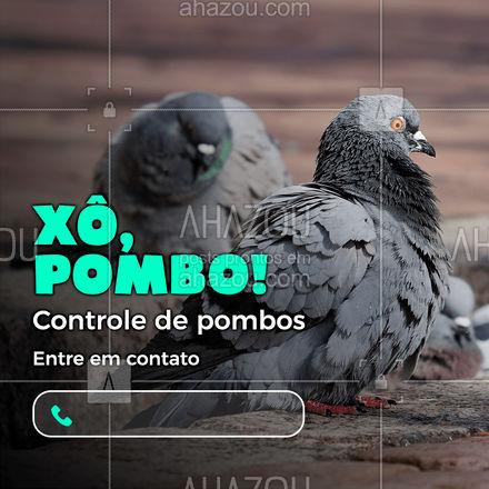 Pombos causam doenças. Entre em contato com a gente e proteja sua residência! (xx) xxxxx-xxxx #AhazouServiços #doenças #dedetização #ddt #proteção #controledepombos #pombos #doenças #AhazouServiços