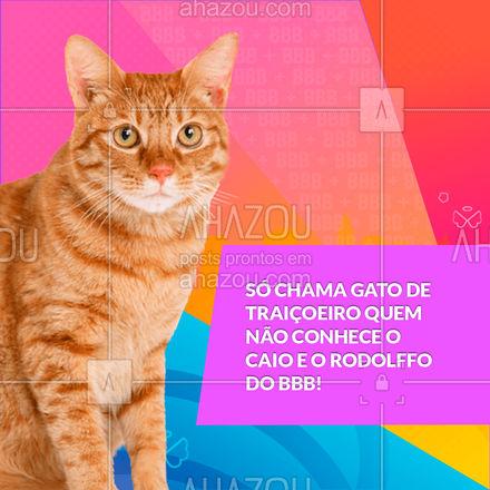 Os gatos são uns amores, ao contrário de certos aí! ?  #bbb #bbb21 #memesbbb #AhazouPet  #petsofinstagram #petlovers #ilovepets