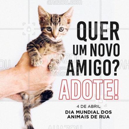 Adote um animal de rua e ganhe um amigo fiel e companheiro! #AhazouPet #naocompreadote