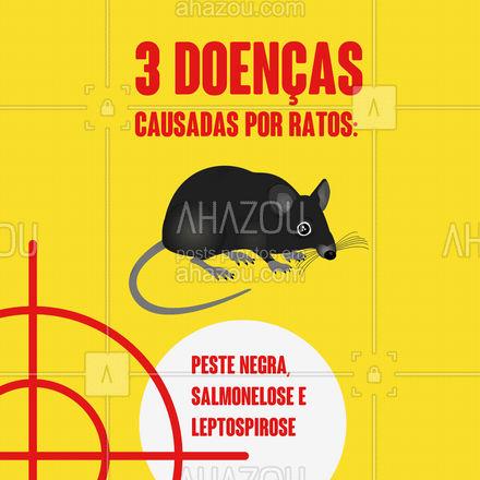 Os ratos são responsáveis por muitos danos à saúde e causadores de doenças. A mais conhecida é a leptospirose, causada pela sua urina. Causa febre alta, dor de cabeça, sangramento, dor muscular, calafrios, olhos vermelhos e vômitos. Dá arrepio só de imaginar, né!? ? Mais um motivo para manter o controle de pragas em dia! #AhazouServiços #controledepragas #ratos #doenças #leptospirose #pragas #causadores #pragasurbanas #leptospirose