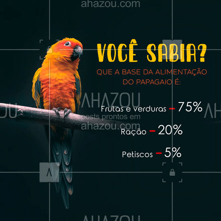 Dieta balançeada né mores?? ? #AhazouPet #alimentaçãopapagaio #dicas #papagaio #comidaparapapagaio #dietapapagaio #petshop #aves #avedomestica #curiosidade #AhazouPet