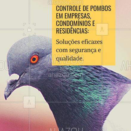 Mantenha os pombos sob controle! Entre em contato e solicite um orçamento: ?(preencher) #AhazouServiços #controledepombos #pombos #segurança #qualidade #ddt #serviços #saúde