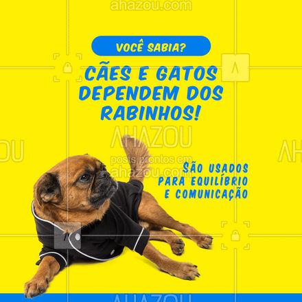 Os pets demonstram sentimentos pelo rabo! Quando seu pet está abanando o rabinho, ele está se comunicando com você! ? #AhazouPet  #cats #ilovepets #petoftheday #dogs #petlovers #dogsofinstagram