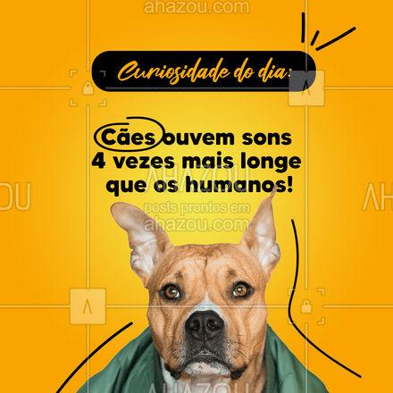 A audição dos cães detectam 67 até 45.000 hertz. Incrível, né? ? #AhazouPet  #petsofinstagram #petlovers #dogs #petoftheday #ilovepets #dogsofinstagram