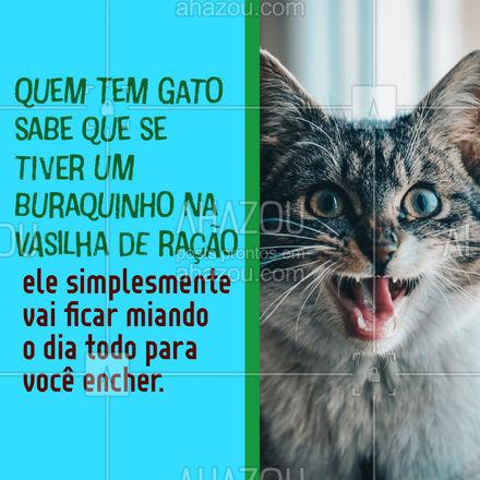 É uma comédia, mas quem tem gato sabe que eles odeiam se a vasilha tiver um pequeno buraquinho aparentando que está faltando ração! Conta pra gente, o seu gato também faz isso? ?? #DiaDoGato #Gato #AhazouPet #Gatinho