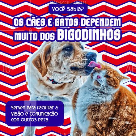 Também dão indicações sobre o ambiente ao pet! ? Você sabia? #AhazouPet #cats #ilovepets #petoftheday #petlovers #petsofinstagram #pets #dogsofinstagram #dogs