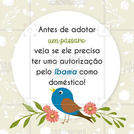 Antes de adotar qualquer pássaro verifique se será necessário alguma autorização especial pela adoção com o Ibama e quais condições melhores para cuidar de seu pássaro! ? #Pássaros #Ibama #AhazouPet #Pet