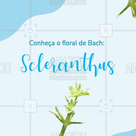 Se fazer escolhas parece um tortura, esse floral é ideal para você #floraisdebach #floralscleranthus #AhazouSaude #carrosselahz #terapiascomplementares
