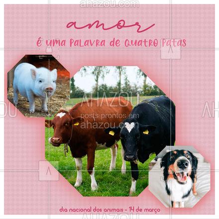 É difícil não amar todos os bichinhos né?! ????????    #ahazou  #frasesmotivacionais #motivacionais #motivacional #diadoanimal  #animal #14demarco