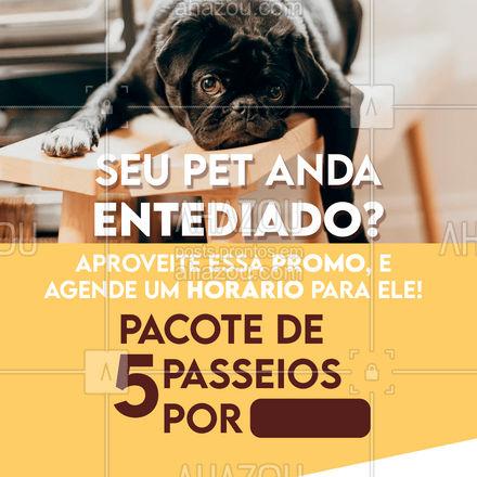 Seu pet vai amar sair de casa e agasta a energia acumulada! Faça esse mimo para ele agende seu horário! #dogwalkersofinstagram #dogsitter #AhazouPet #petsitting #dogtraining #dogwalk #doglover #dogwalker #petsitter #dogdaycare #promoçao #descontos