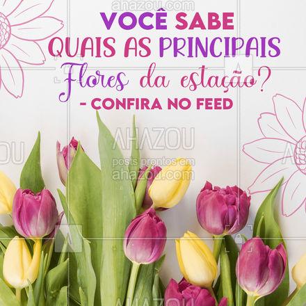 🌺 Rosa, 🌺 Girassol 🌺 Margaridinha 🌺 Orquídea 🌺 Jasmim 🌺 Hortênsia  🌺 Helicônia 🌺 Alamanda 🌺 Clívia 🌺 Gérbera 🌺 Hibisco 🌺 Gazânia 🌺 Jasmim-estrela 🌺 Lágrima-de-cristo 🌺 Boca-de-leão 🌺 Crisântemo 🌺 Frésia 🌺 Estefânia 🌺 Narciso 🌺 Violeta 🌺 Dedaleira 🌺 Dama-da-noite   #AhazouEdu #primavera #curiosidade #vocesabia #educação #estacoesdoano #flores #Floresdaprimavera #floresdaestação