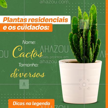 Os cactos são plantas perfeitas para qualquer ambiente e pode se adaptar muito bem. Ela é uma boa opção para pessoas que não tem muito tempo para jardinagem ou são esquecidas. Como é uma planta normalmente encontrada em locais áridos, ela não precisa de rega constante, sendo necessária regar 1 vez a cada 15dias.  #dicas #decoração #plantas #AhazouDecora #AhazouArquitetura #homedecor