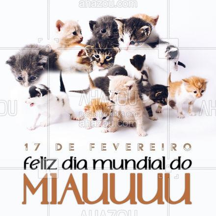 Felicidade é ter um, ou dois, ou três gatos pra chamar de seu! #gato #cat #diadogato #diainternacionaldogato #17defevereiro #AhazouPet #cats #ilovepets #petlovers #petsofinstagram