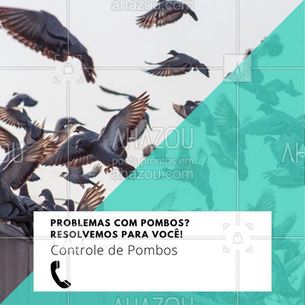 Contrate nossos serviços e diga adeus aos pombos! Entre em contato: ?(preencher) #AhazouServiços #pombos #controledepombos #controle #ddt #dedetização #serviços #problemas #residência