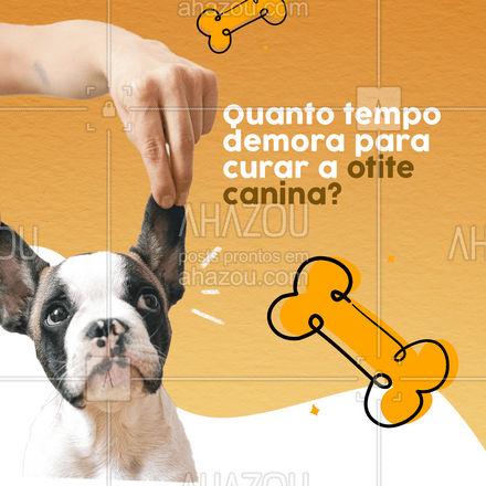 O tempo do tratamento depende do grau da otite e do que está causando a doença, mas geralmente  de 1 a 3 semanas é o tempo de tratamento da otite canina.  #AhazouPet #medvet #vetpet #pet #veterinario #petshop #clinicaveterinaria