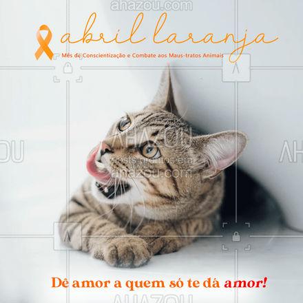 Ame, cuide, proteja e fale por eles!? #AhazouPet  #cats #dogsofinstagram #petlovers #dogs #abrillaranja #animais #combatemaustratos