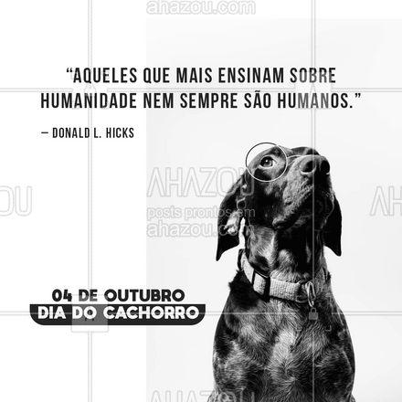 Sem dizer uma só palavra, os cães tem muito a nos ensinar! Basta estar com o coração aberto para aprendermos 🐶❤🐾! #frasesmotivacionais #motivacionais #motivacional #ahazou #cachorro #diadocachorro