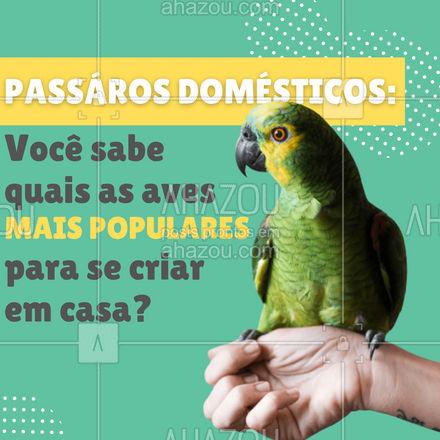 As aves mais populares são:  ?Papagaio ? Periquito ? Canário  ? Calopsita    #AhazouPet #passarosdomesticos #periquito #papagaio #petshop #ave #avedomestica #curiosidade