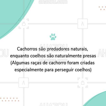 É possível que o cachorro machuque apenas querendo brincar, mas também é possível que o coelho se torne agressivo. A relação é imprevisível e depende muito do cuidado com que o assunto é tratado. #carrosselahz #AhazouPet #veterinario #veterinaria #vet
