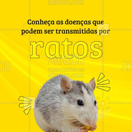 Por isso é importante manter sua casa sempre longe de pragas! ? #ratos #dedetização #carrosselahz #AhazouServiços #dedetizador #AhazouServiços