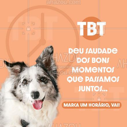 Nossa agenda está aberta!  #AhazouPet  #cats #dogsofinstagram #petlovers #petsofinstagram #dogs #petoftheday #ilovepets