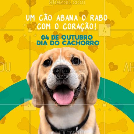 Hoje é o dia daquele serzinho que nos ensina que o amar não precisa de palavras! #frasesmotivacionais #motivacionais #motivacional #ahazou #cachorro #diadocachorro