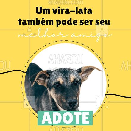 Tire um animal das ruas e dê um lar feliz para ele! ?#dogs #AhazouPet #petlovers #adoçao #cachorro #convite #AhazouPet
