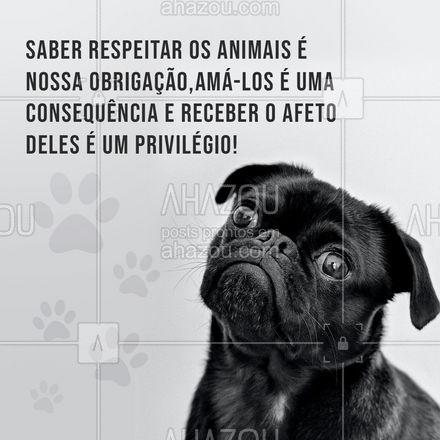 Respeitar os animais é uma obrigação da humanidade para com eles. Amá-los acaba se tornando uma consequência e receber todo o afeto e dedicação dado a eles, isso é um privilégio. ??? #cats  #dogsofinstagram  #petlovers  #petsofinstagram  #ilovepets  #petoftheday  #dogs