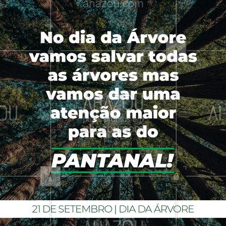 Com essas queimadas no Pantanal precisamos dar uma atenção maior para a preservação das árvores e da natureza em geral e por isso precisamos da ajuda de todos! Salve as árvores, salve o pantanal. ?#Natureza #Arvores #ahazou #DiadaArvore #21deSetembro #MeioAmbiente