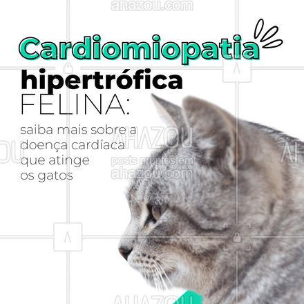 """A cardiomiopatia hipertrófica felina é uma doença genética. Ao passar dos anos, o gatinho apresenta hipertrofia do músculo cardíaco, ficando com o """"coração musculoso"""". Assim, o coração começa a bombear sangue com mais força e o fluxo de sangue no organismo é prejudicado. Quer saber mais sobre essa doença? Deixe sua pergunta nos comentários! #AhazouPet  #medicinaveterinaria #medvet #veterinaria #cardiomiopatiafelina #doença"""