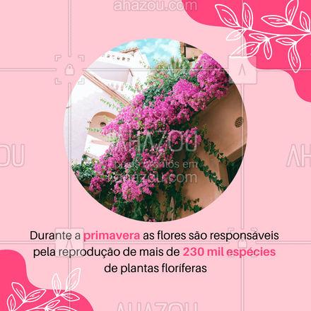 As flores não só deixam as paisagens e jardins lindos elas agregam muito para o ecossistema. 🌻🌻  #AhazouEdu #primavera #curiosidade #vocesabia #educação #estacoesdoano #plantas #plantasfloriferas