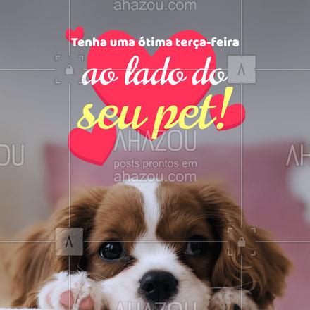 Aproveite a presença do seu amiguinho para viver lindos momentos e se permitir sentir o amor! 😺🥰️ #AhazouPet #pets #petlovers #cats #dogs #terçafeira