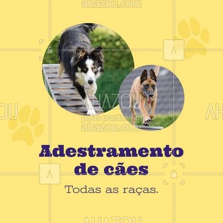 Serviço eficaz e de qualidade! Entre em contato. #AhazouPet #adestramento #caes #cachorro #racas   #dogtraining