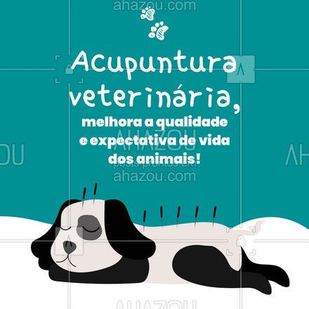 Isso mesmo, acupuntura veterinária, o tratamento que você tanto gosta, agora seu pet pode ter também! #AhazouPet #medicinaveterinaria #medvet #vetpet #veterinarian #veterinario #vet
