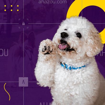 Seu pet não aguenta mais esperar até o dia do passeio, então entre em contato e nós te ajudaremos #passeio #passear #editaveisahz #AhazouPet #dogwalker #engraçado