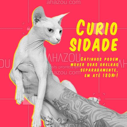 Você sabia? Gatinhos fazem tudo e um pouco mais! ? #AhazouPet #catstyle #cats #ilovepets #petoftheday #petsofinstagram #petlovers