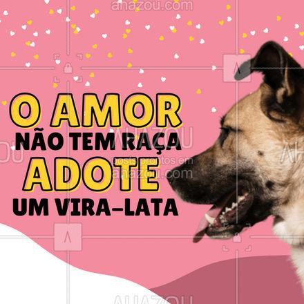 Adote um vira-lata e receba todo amor do mundo em lambidas!??  #pets#AhazouPet #adoção #viralata