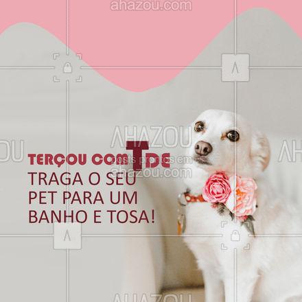 Que tal aproveitar para trazer o seu pet para um banho e tosa, para ele ficar o resto da semana cheirosinho? Entre em contato e agende um horário! #petshop #tosahigiênica #AhazouPet #banhoetosa #dogs #cats #petlovers #instapet #ilovepets #terçou #terçafeira