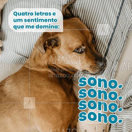 Hoje no dia mundial do sono, eles podem dormir até tarde! ???#AhazouPet #cats #dogsofinstagram #petlovers #dogs #petoftheday #sono #engraçado #meme #diadasoneca #ilovepets #AhazouPet